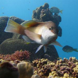 Sosua Diving