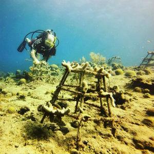 CoralSlider